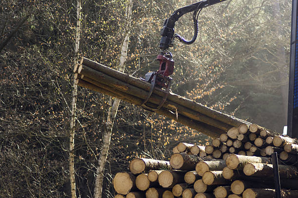 loading harvested timber in the forest - logging equipment stock photos and pictures