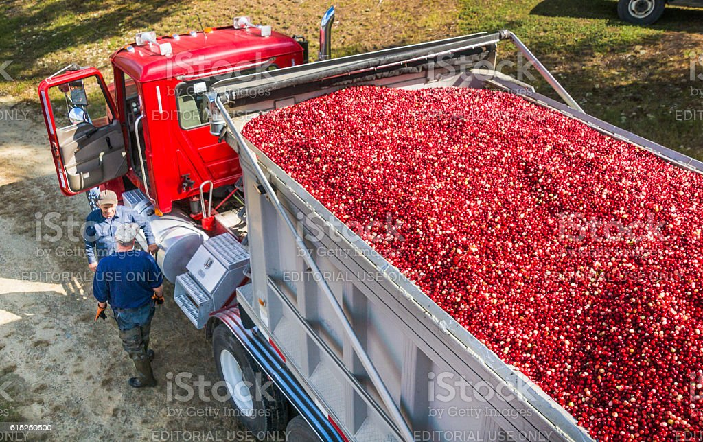 Loading the Berries stock photo
