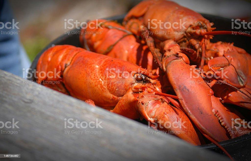 Lobster Bake stock photo