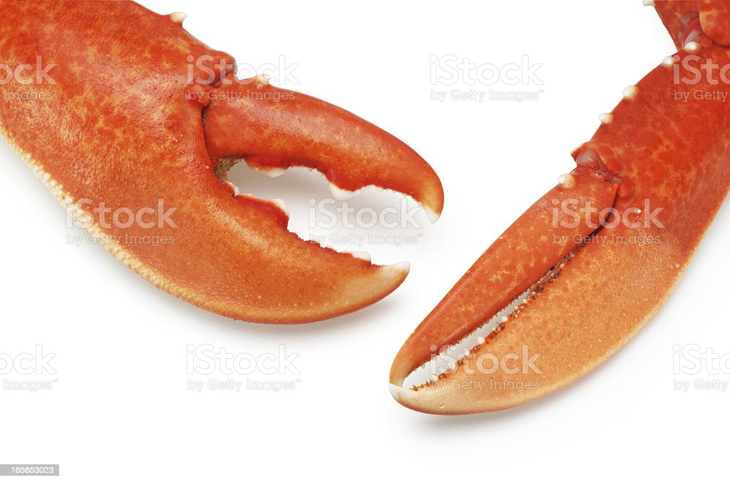 Lobster Claws stock photo