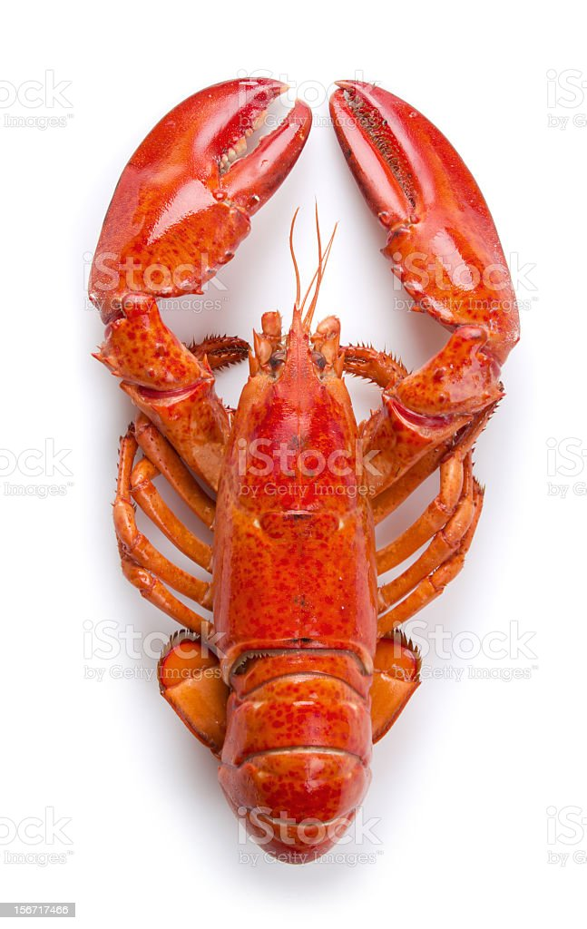 Lobster close up stock photo