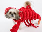 Lobster Envy