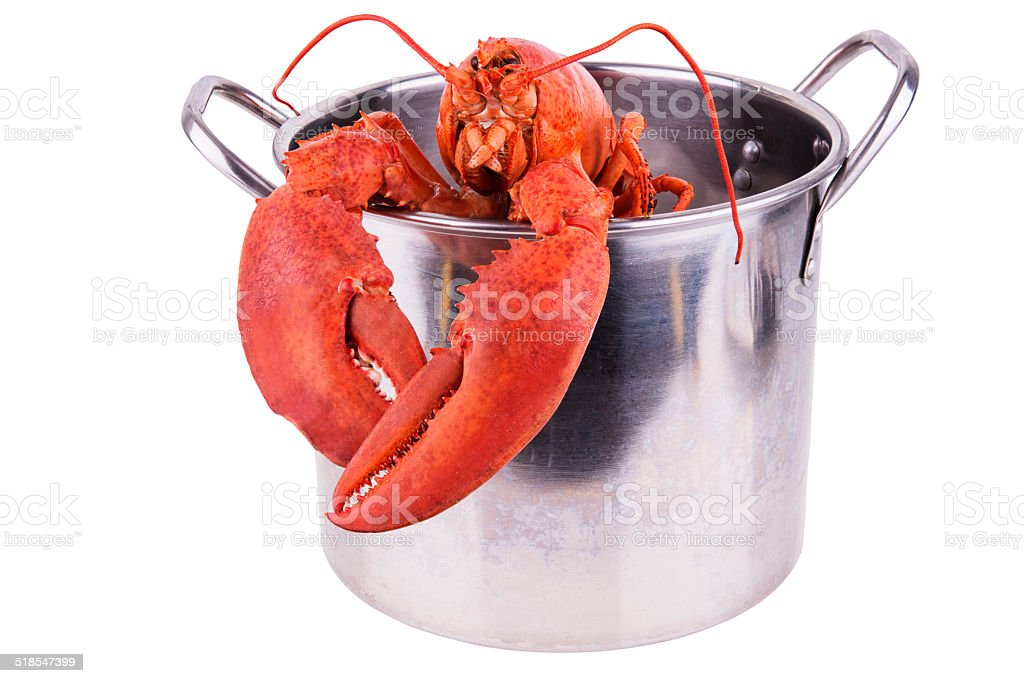 Lobster in pot stock photo