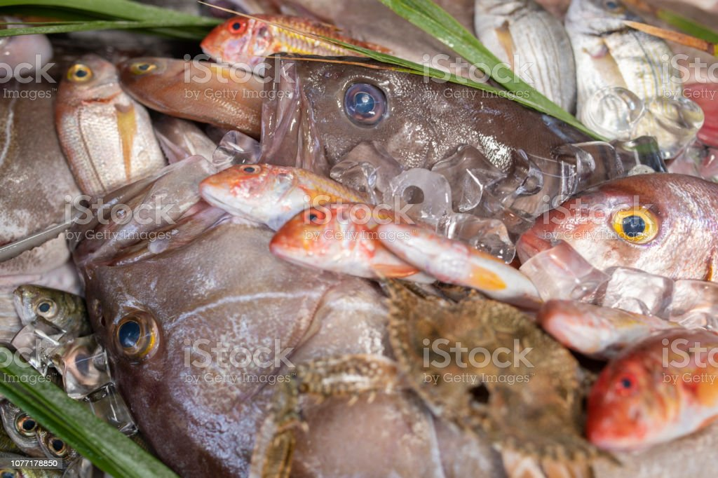 Lobster, octopus, red mullet, boops boops, sea bass, sea bream, white grouper, prawns and various fresh seafood and fishes in fish market stock photo