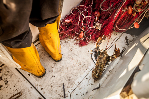 Lobster On Fishermen Boat Stock Photo - Download Image Now