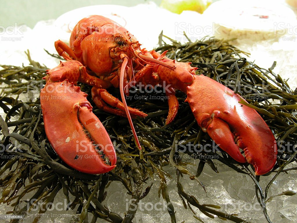 Lobster on ice royalty-free stock photo