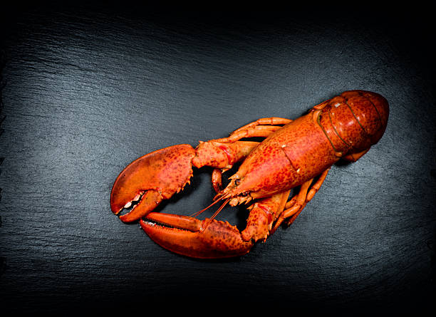 lobster on slate stock photo