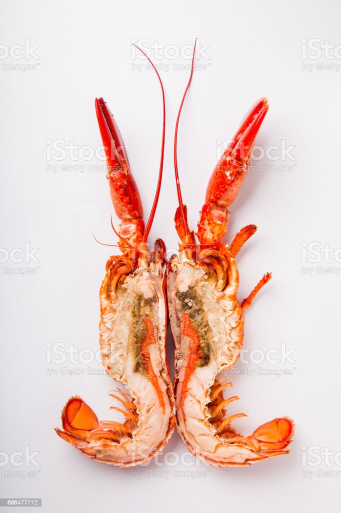 Lobster on white Background stock photo