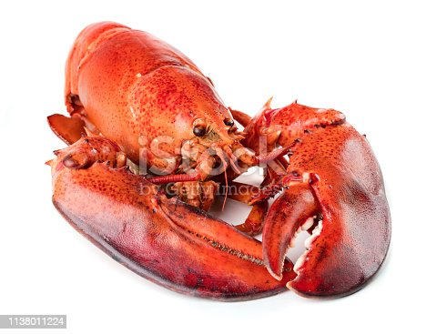 Red lobster on white background