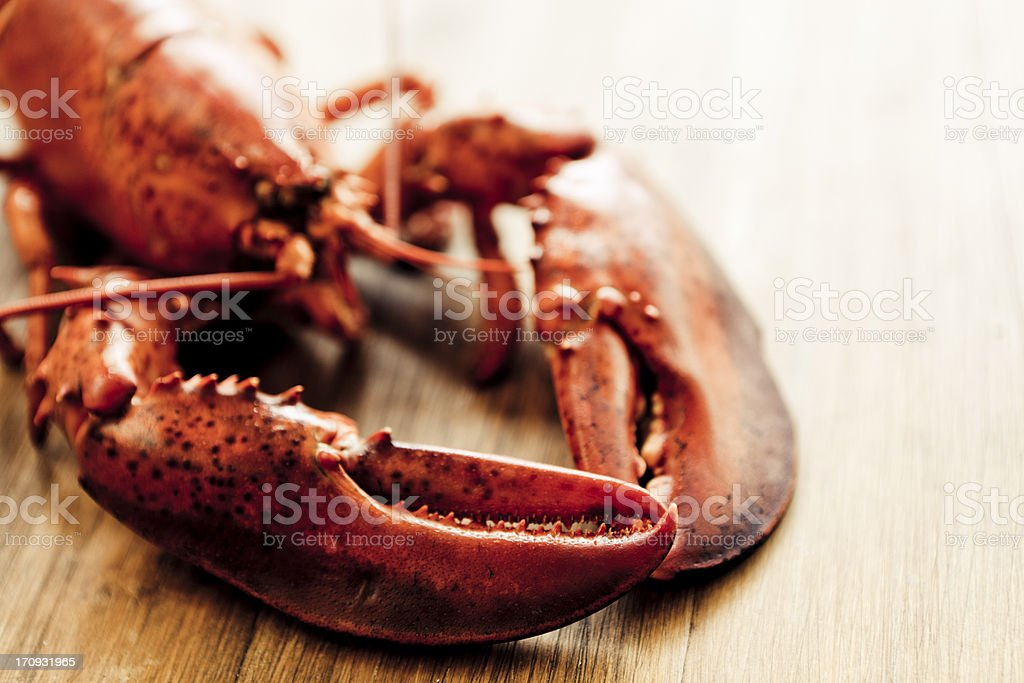 Lobster royalty-free stock photo