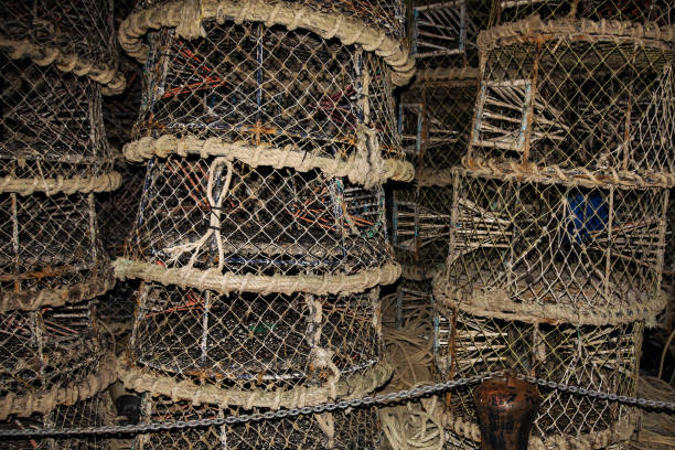 pots et filets de homard au port de poole prêt à aller pêcher - cage animal nuit photos et images de collection