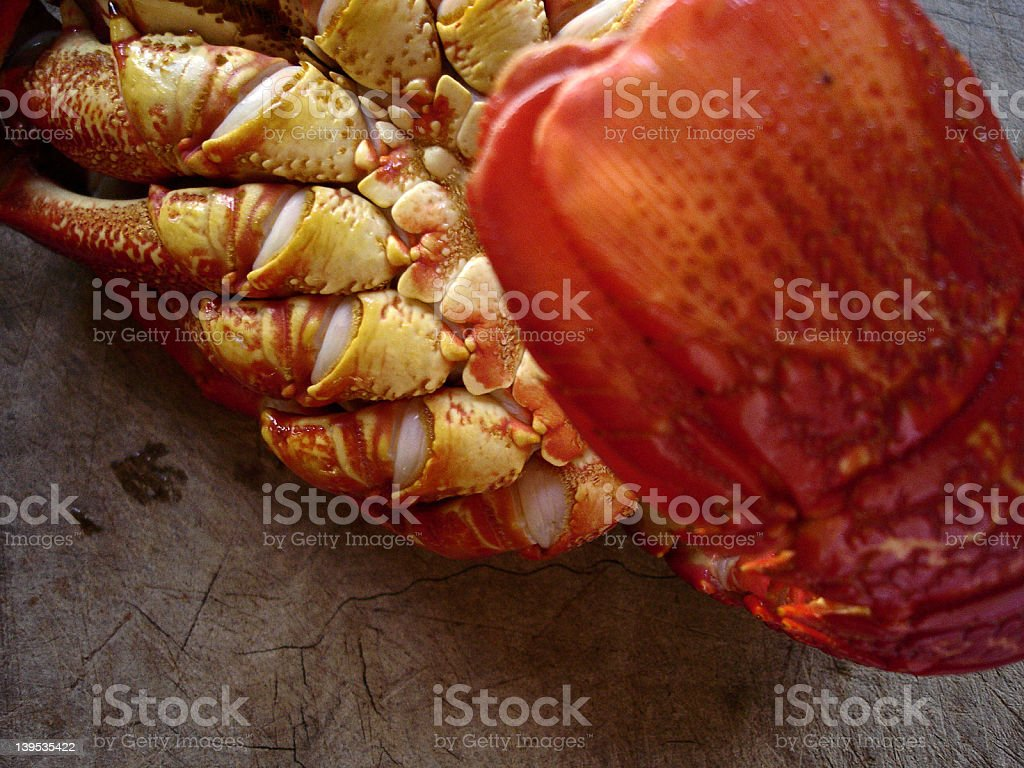 Lobster_01 royalty-free stock photo