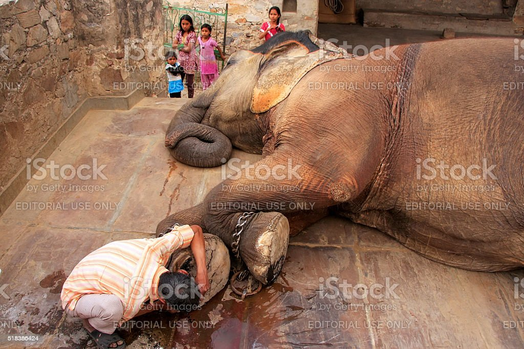 Local caretaker cleaning elephant's foot at small elephant quart stock photo