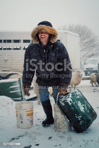 Wild Mountain Farm , Canning , Nova Scotia / Canada - DEC 31 2017 : local farmer feeding his animals from buckets of grain and minced vegetables during a snow storm with sheep walking in the background
