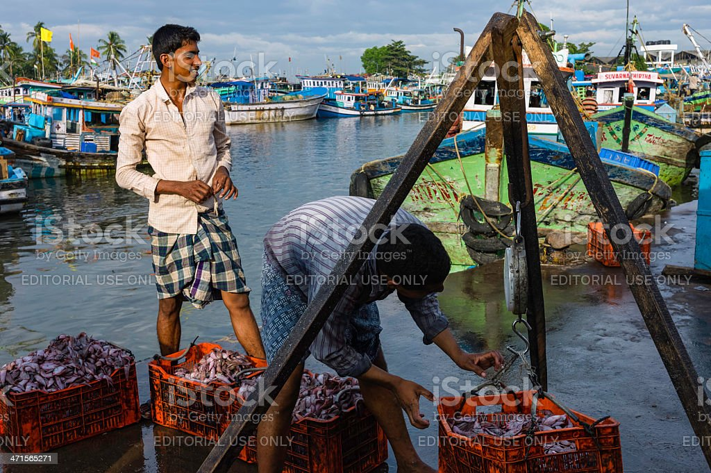 Local fishermen weigh catch of fish, Kannur, Kerala, India. royalty-free stock photo
