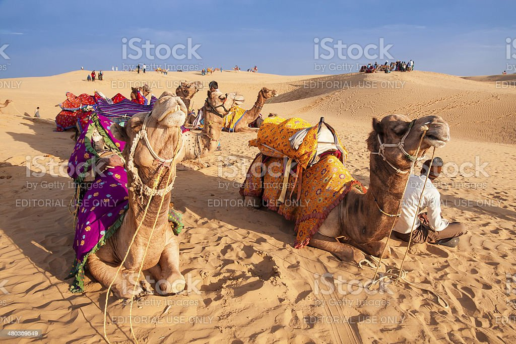 Local people and their camel rest on Thar desert royalty-free stock photo