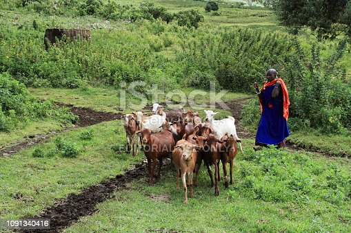 local woman with her goats, grazing and herding the plains.