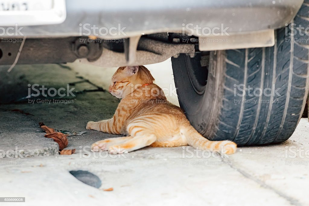 Local/Homeless/Abandon Cat in the village royalty-free stock photo