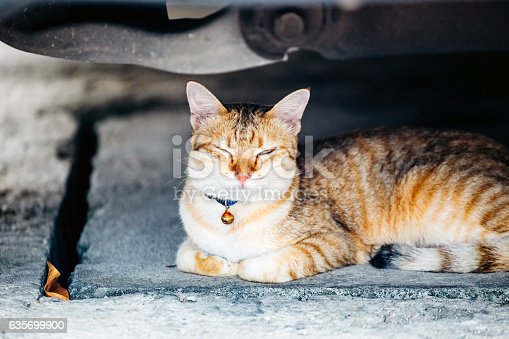 Localhomelessabandon Cat In The Village Stock Photo & More Pictures of Animal