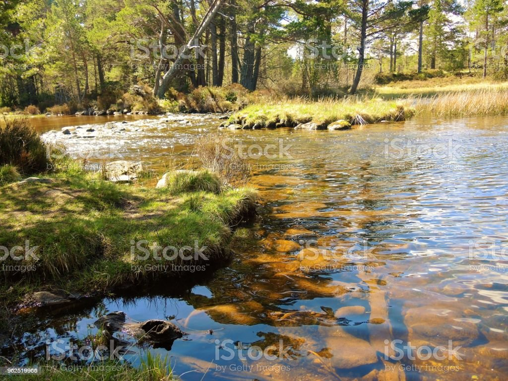 Loch Morlich. - Royalty-free Beauty In Nature Stock Photo