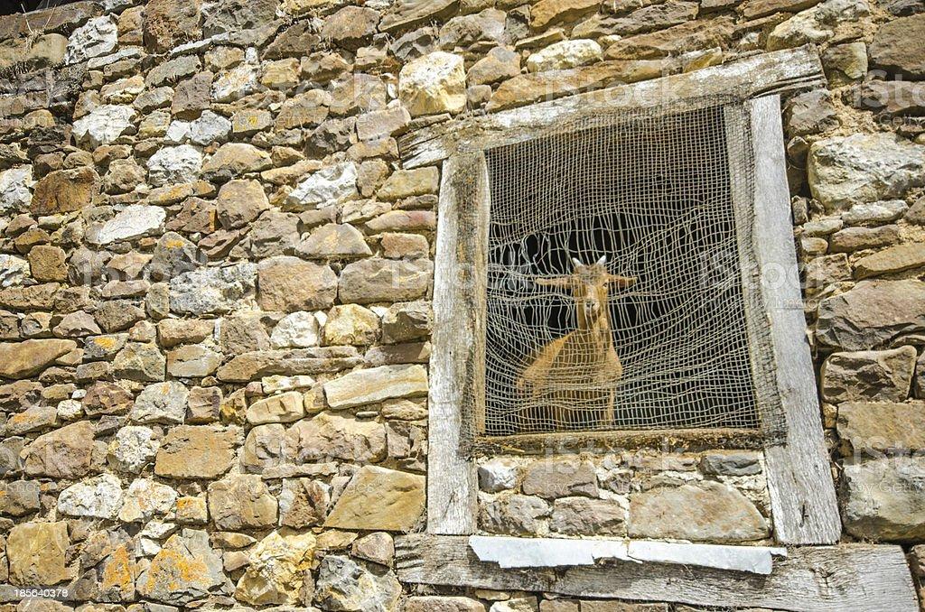 Locked in the barn royalty-free stock photo