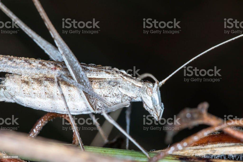 locust, grasshopper stock photo