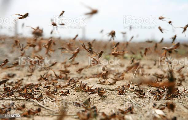 Photo of locust on the move