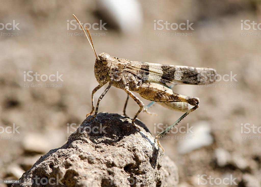 locusts in the desert field stock photo