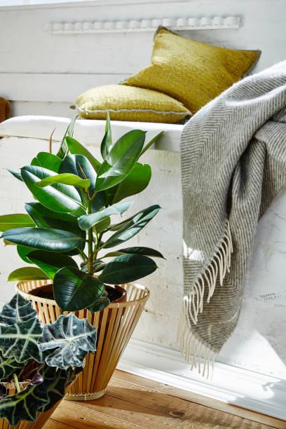 loft-stillleben pflanzen und decke im lebendigen morgenlicht - stuhlpolster stock-fotos und bilder