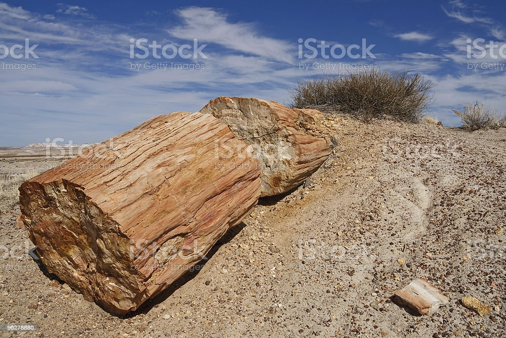 Log at Petrified Forest National Park, Arizona royalty-free stock photo