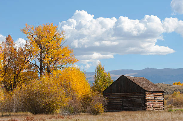 Log Cabin in Fall An old 1880's log cabin sits among cottonwood and aspen trees that have turned a brilliant gold at the height of the autumn season.  In the background are undulating mountainsides filled with more color. cottonwood tree stock pictures, royalty-free photos & images