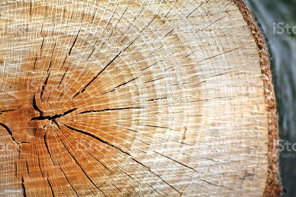 Log close-up stock photo