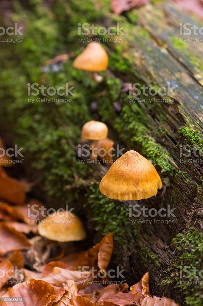 Log Fungus stock photo