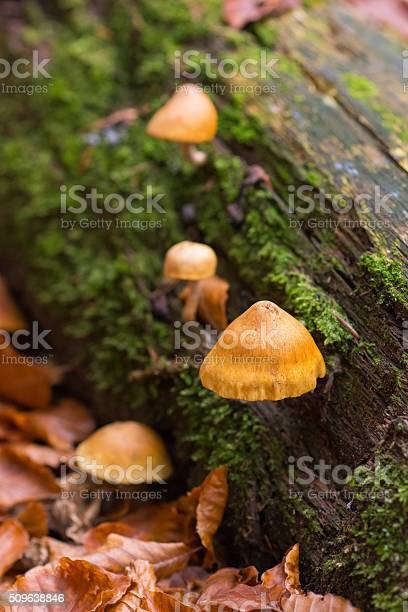 Log Fungus Stock Photo - Download Image Now