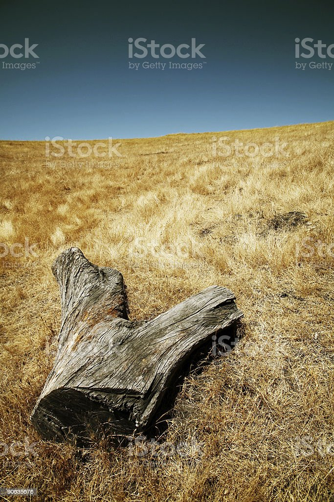 Log in a Meadow royalty-free stock photo