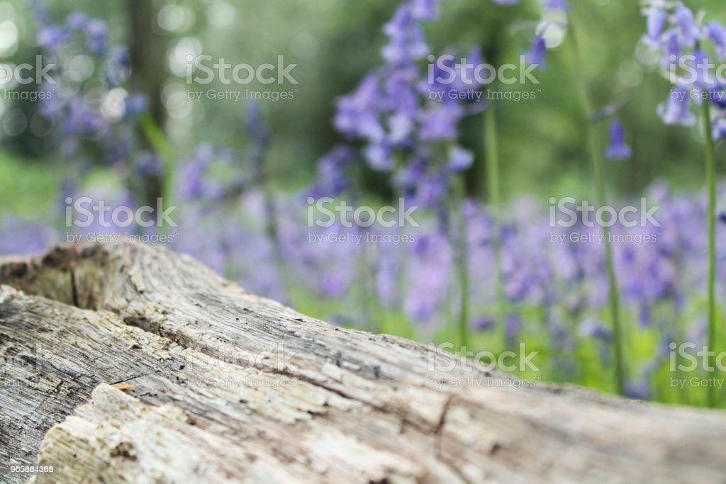 Inloggen bluebells - Royalty-free Achtergrond - Thema Stockfoto