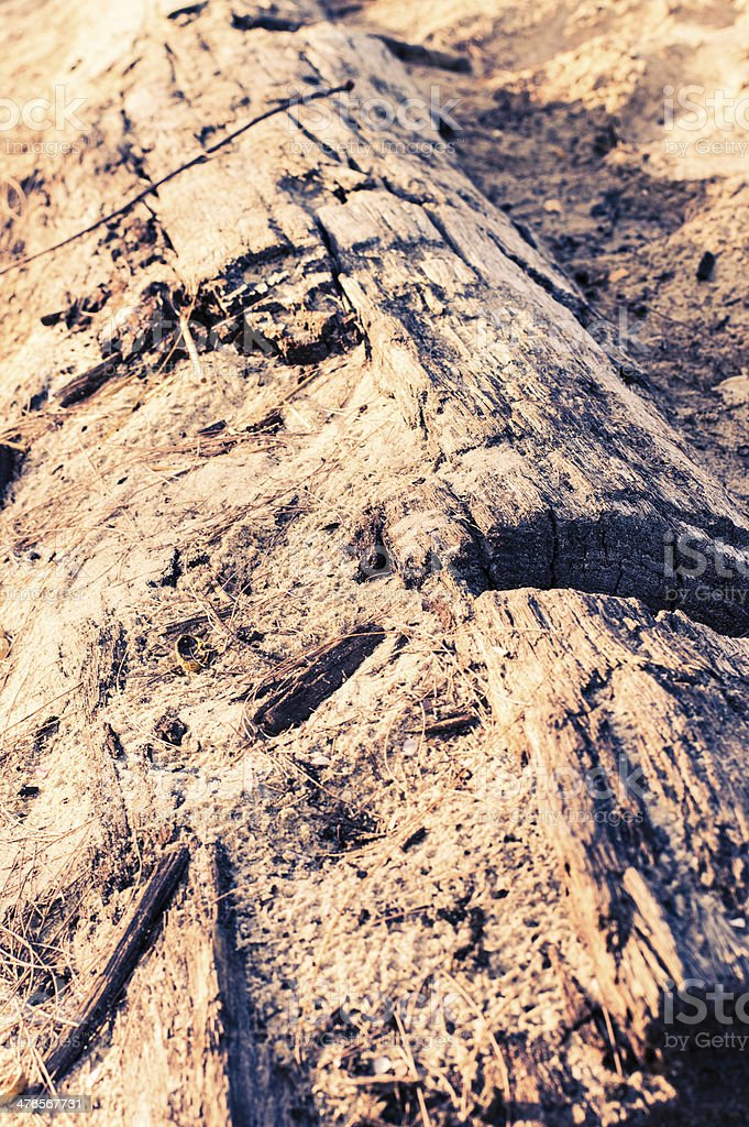 Log is decayed royalty-free stock photo