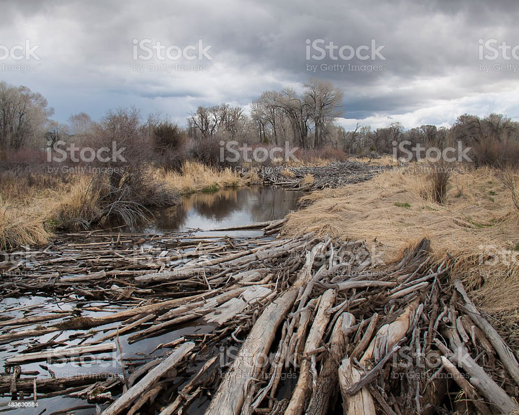 Log Jam on the North Platte River, Wyoming stock photo