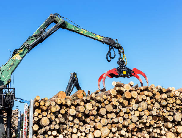 log mover - logging equipment stock photos and pictures