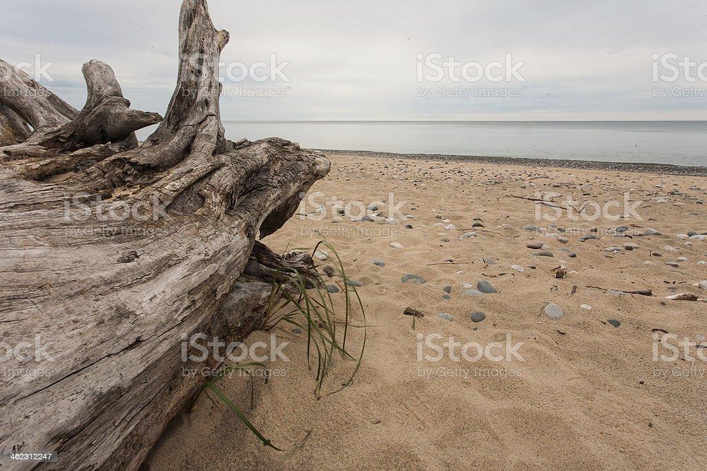 Log on a Beach stock photo