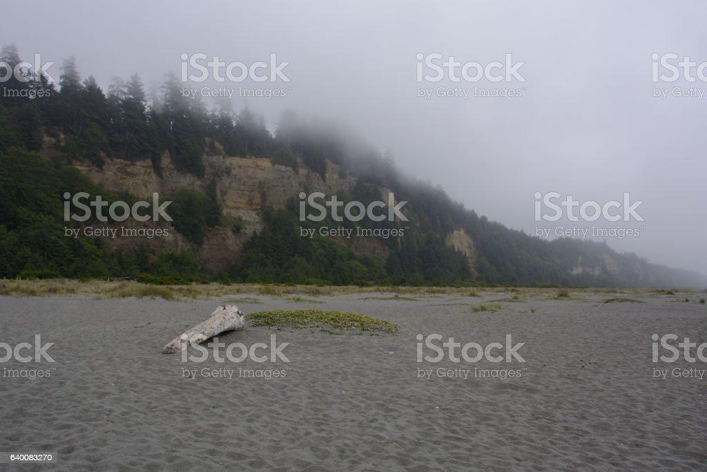 Log on the Gold Bluffs Beach, California stock photo