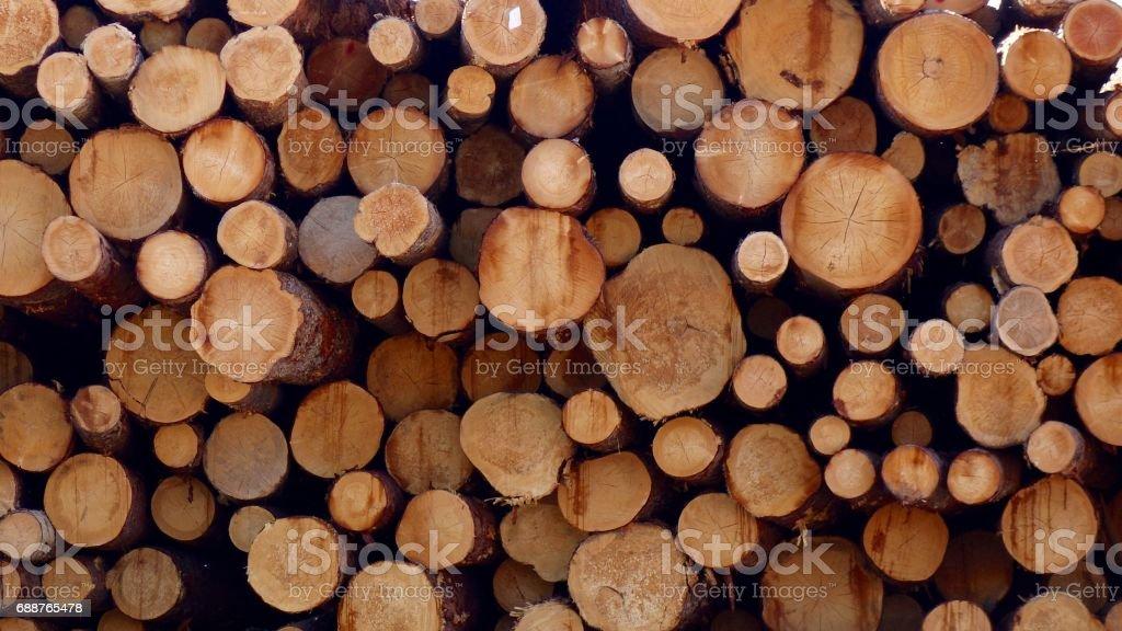Log Pile Cross Section stock photo