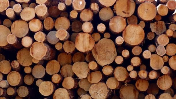 log pile cross section - industria forestale foto e immagini stock