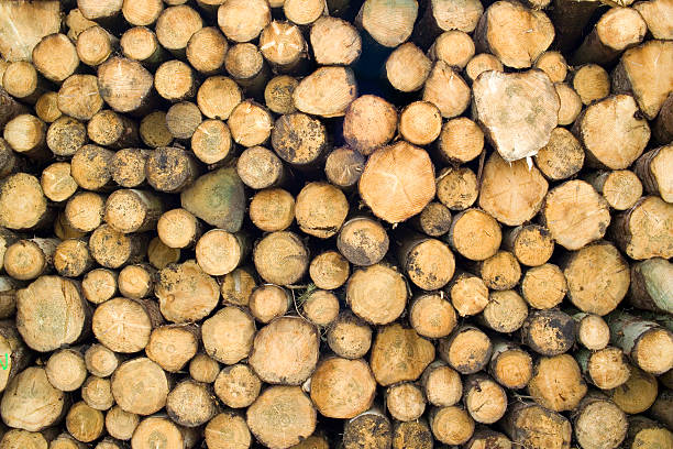 log pile, horizontal view - tree surgeon stock photos and pictures