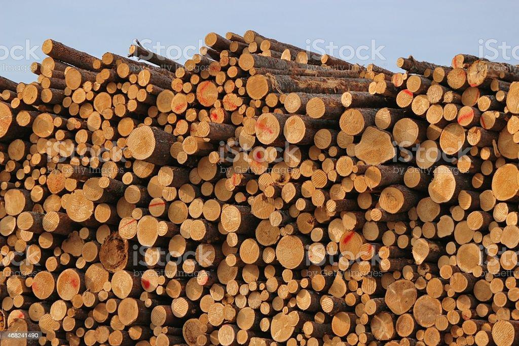 Log Piles stock photo