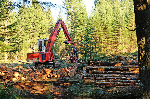 log processor - logging equipment stock photos and pictures