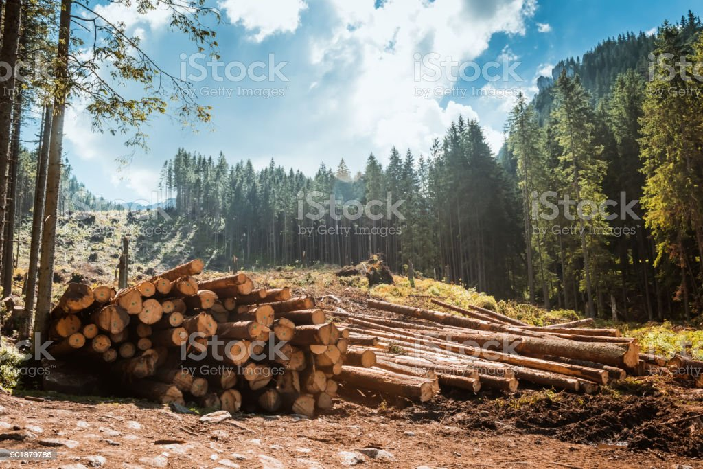 Log stacks along the forest road stock photo