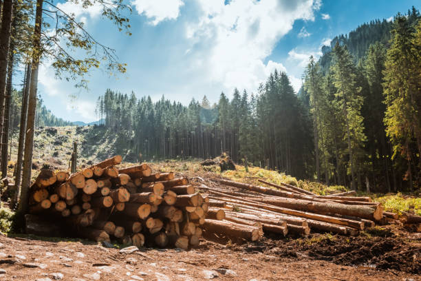 log stacks along the forest road - woodland stock pictures, royalty-free photos & images