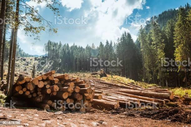 Log Stacks Entlang Der Forest Road Stockfoto und mehr Bilder von Abholzung