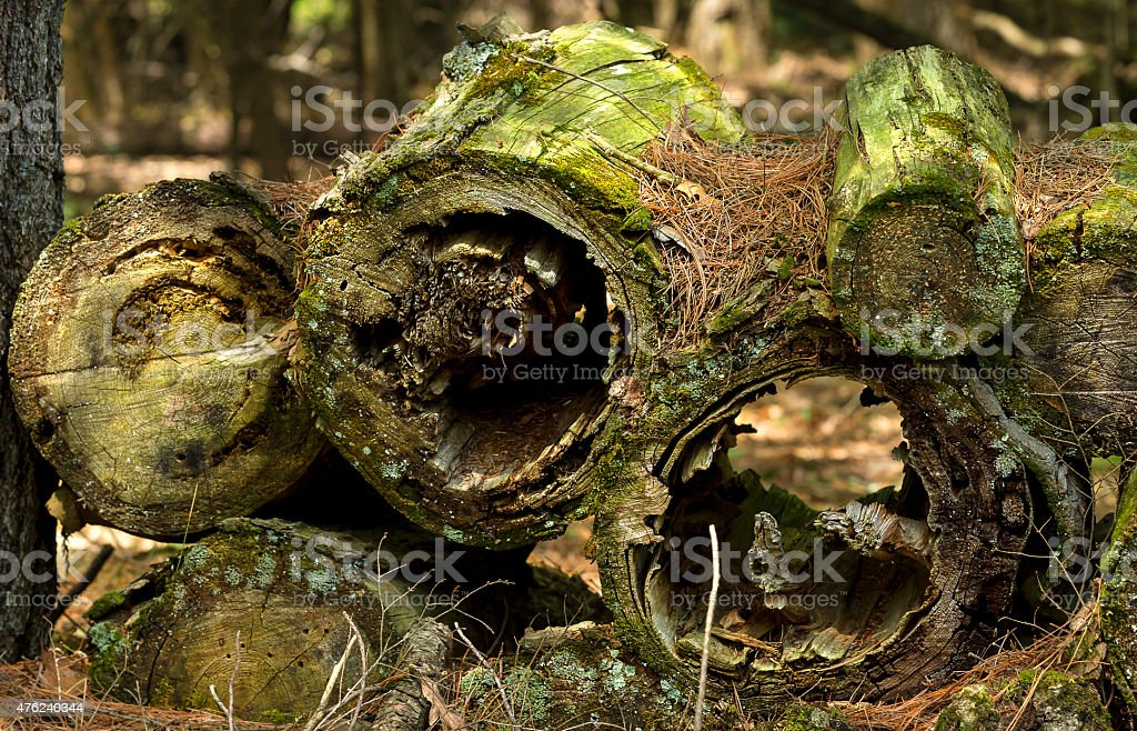 Log stacks in forrest stock photo